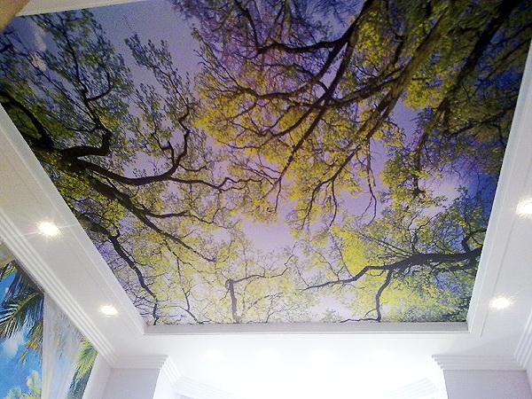Потолок из гипсокартона с фотопечатью