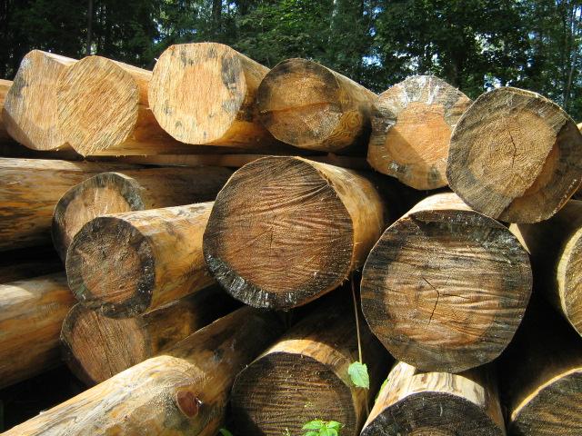 Чем эффективно обработать дерево от плесени?