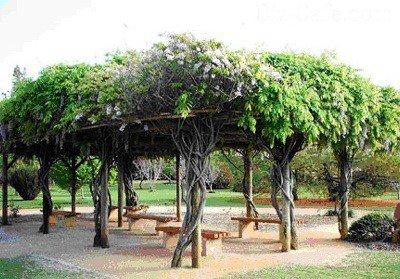 Беседка из стволов деревьев