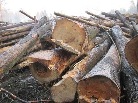 зараженный грибком гнили лес