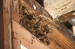 Гниение древесины из-за сырости