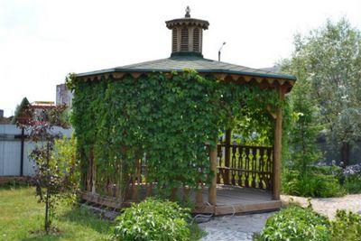Как сделать беседку из винограда своими руками? 19 ФОТО вьющихся растений для беседки многолетних, советы по выбору сорта и формовки винограда или цветов